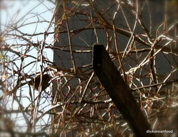 Sparrow in silhouette