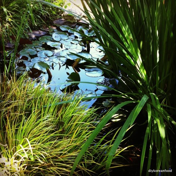 On golden pond...on Flatbush Avenue