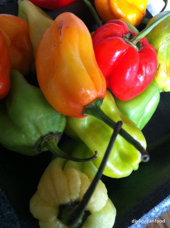 Scotch Bonnets: Just a few will do you