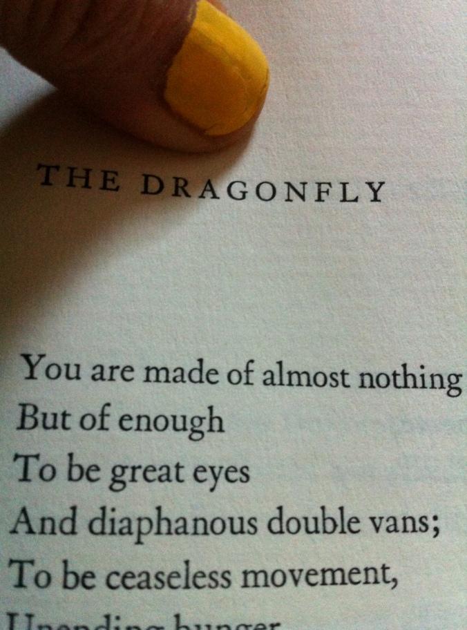 Bogan's dragonfly
