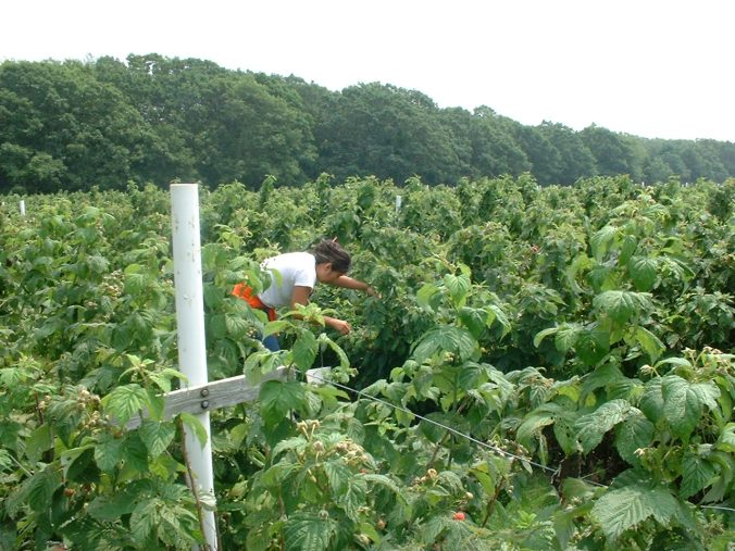 Raspberry fields forever