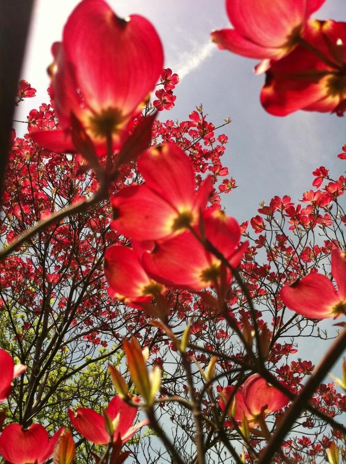 Every blossom will finish and be renewed next season