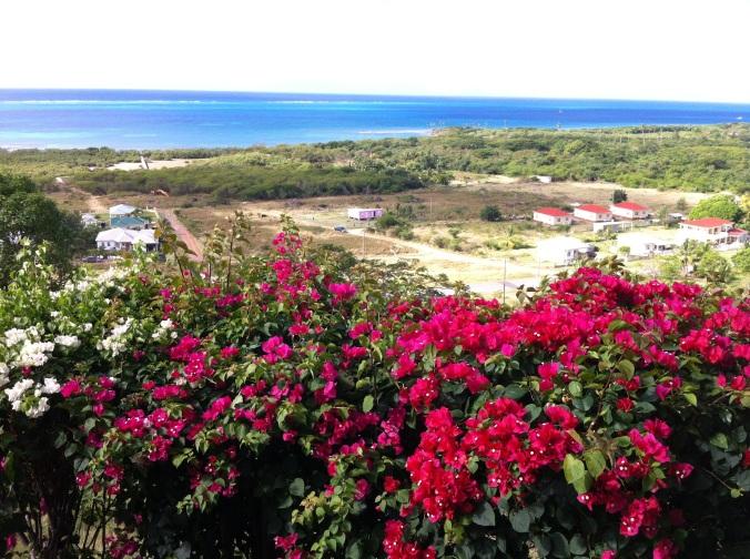 I love Antigua