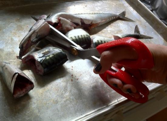 Cut your mackerel