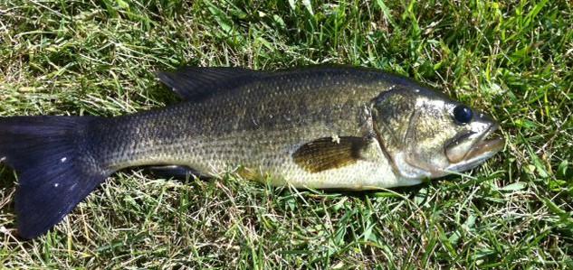 Big boy bass